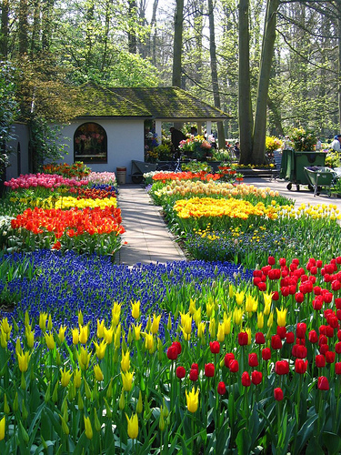 how to go from amsterdam to keukenhof